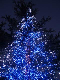 クリスマスツリー 人気ランキング
