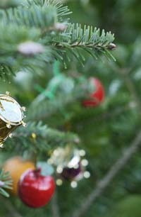 クリスマスツリー ランキング1位