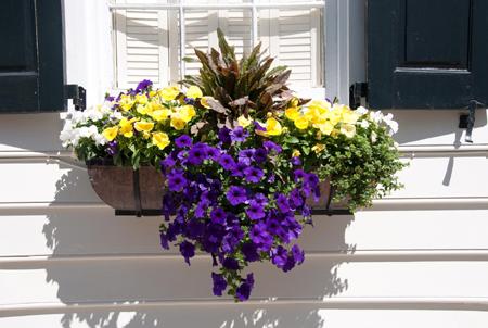 gardening (9).jpg