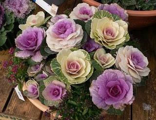 お正月飾り 花
