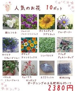 HoneyMint(ハニーミント)花 土 肥料のお得なセット
