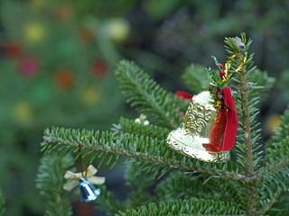 クリスマスツリー コニファー