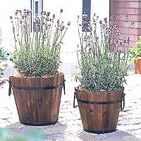 planter (1).jpg