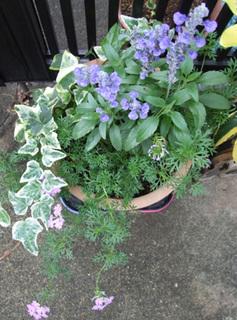 ガーデニングshop岐阜緑園|豪華な花苗 寄せ植えや花壇に